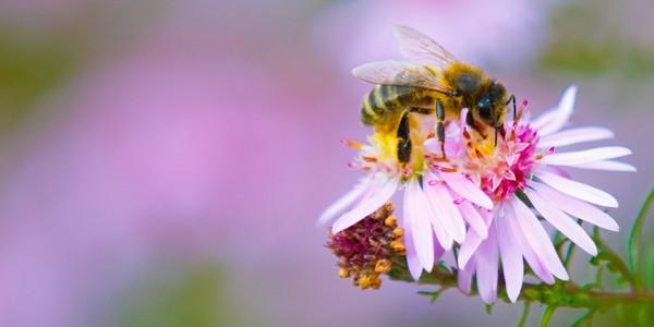 Květový med